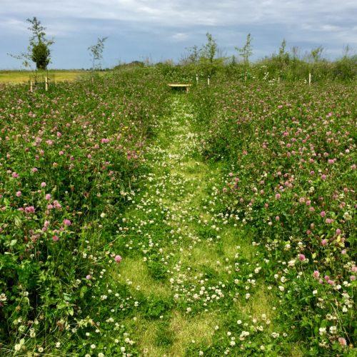 eco burial ground