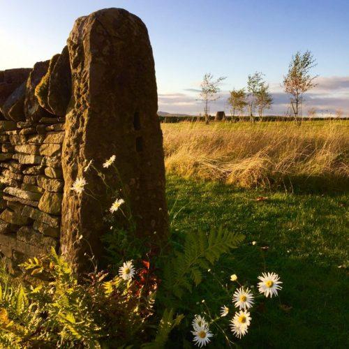 eco burial