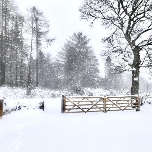 Snowy burial ground